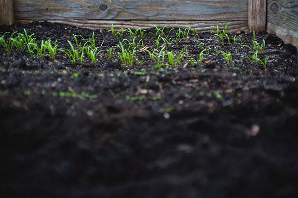 soil-wallpaper-1