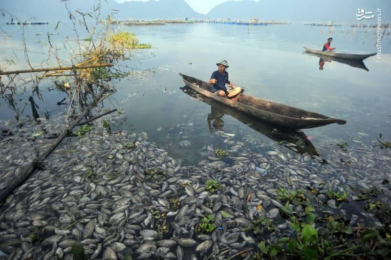 تلف شدن ماهی