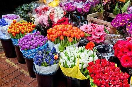 ظرفیت صادرات گل و گیاه کشور یک میلیارد دلار است