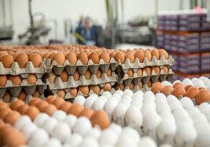 آخرین تحولات بازار تخم مرغ