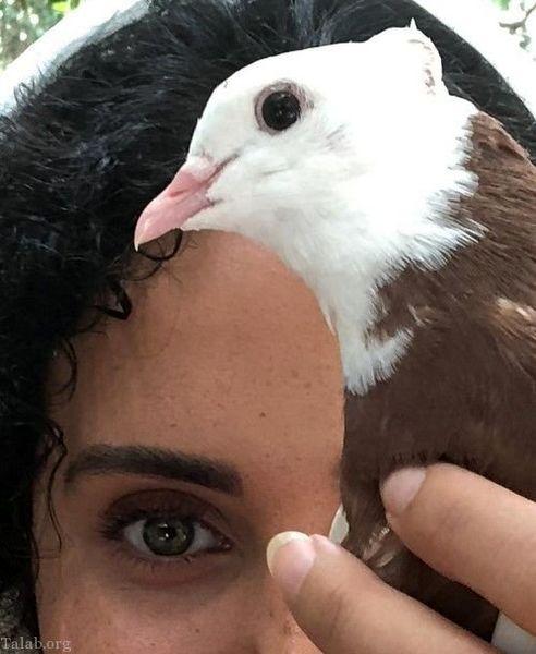 الناز شاکردوست از حیوان خانگی اش رونمایی کرد+عکس