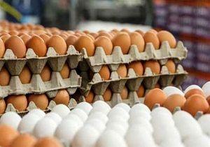 قیمت هر شانه تخممرغ در میادین میوه و تره بار اعلام شد