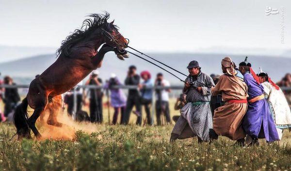 اسبهای وحشی+ تصاویر