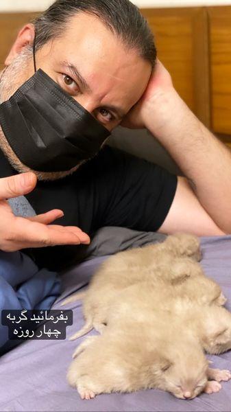 توله گربه های مهراب قاسمخ انی که تازه متولد شده اند + عکس