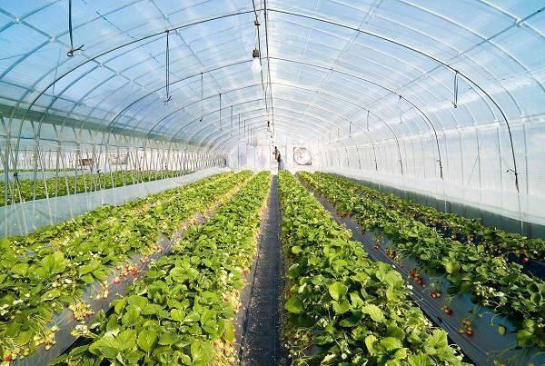 تولید ۲.۲میلیون تن سبزی و صیفی گلخانهای پیشبینی میشود