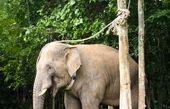 قدردانی یک فیل از دامپزشکی که جانش را نجات داد