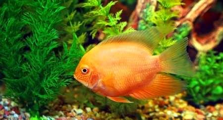 700 هزار قطعه بچه ماهی زینتی در هرمزگان تولید شد