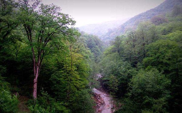 قطع درختان جنگل هیرکانی+تصاویر