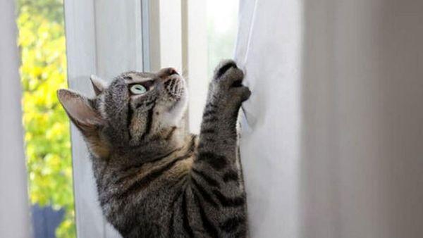 حرکت حیرت آور یک گربه در بالا رفتن از دیوار+ فیلم