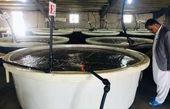 پرورش ماهی در 20 قفس چابهار آغاز شد