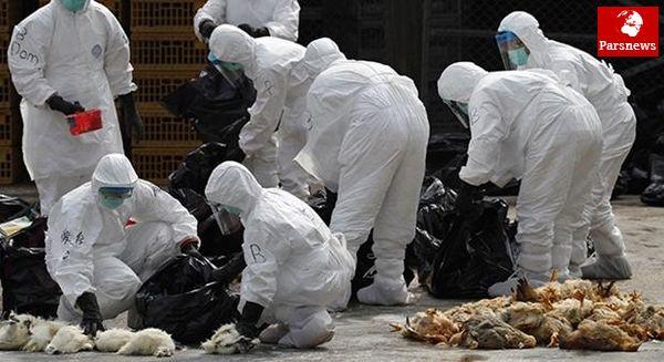 به صدا درآمدن زنگ خطر برای آنفلوانزای فوق حاد پرندگان آنفولانزای مرغی به تهران رسید
