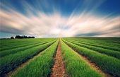 توصیه های هواشناسی کشاورزی برای ۴ روز آینده
