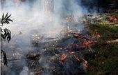 دستگیری عامل آتشسوزی جنگلهای رضوانشهر