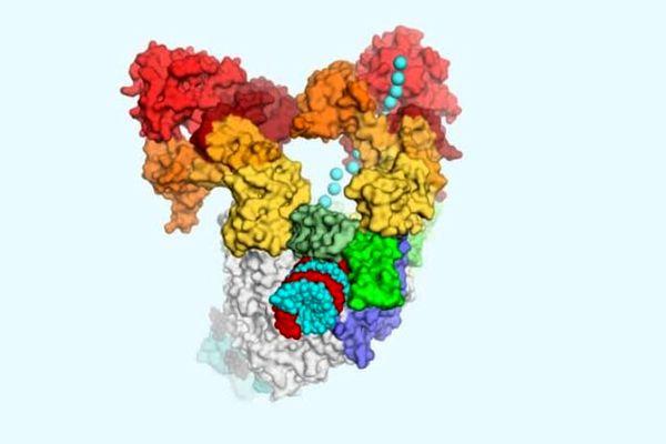 تصویر سیستم تکثیر کروناویروس منتشر شد