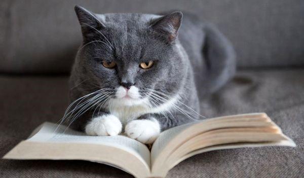 مراقبت و نگهداری درست از گربه های خانگی