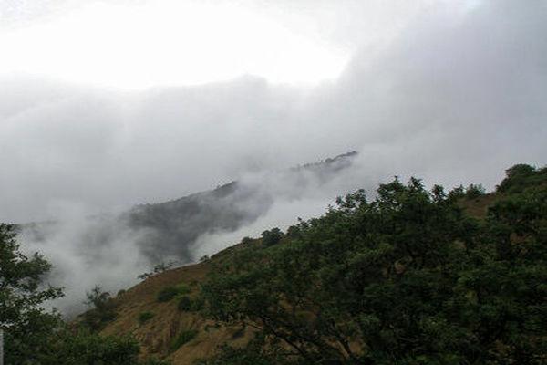درخواست سازمان جنگلها از رئیسی برای ورود به پرونده ۵۶۰۰ هکتاری جنگل های ساری