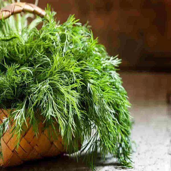 آشنایی با خواص دارویی این گیاه شگفت انگیز