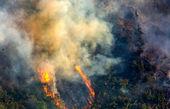 پتانسیل بالای آتشسوزی در جنگلهای کشور