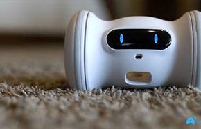 رباتی برای پر کردن تنهایی حیوانات خانگی