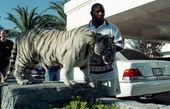 گران ترین حیوانات خانگی سلبریتی ها