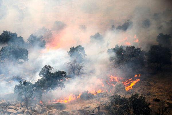 آتشسوزیهای جنگلی را نباید ساده گرفت