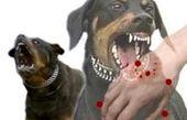 بیماریهای قابل انتقال از سگها به انسان