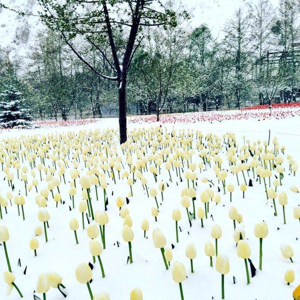 باغ لاله کرج و برف بهاری ۲۷ فروردین ۹۷