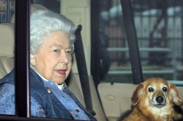 ملکه انگلیس و سگش قرنطینه شدند