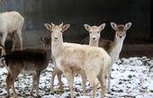 برف و سرمای زمستان در باغوحش قیصری ترکیه