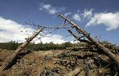 ماجرای قطع درختان لویزان چیست ؟