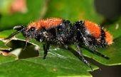 کاهش ۲۵ درصدی جمعیت حشرات