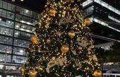 بهنوش بختیاری و درخت زیبای سیدنی
