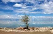 تمام تالابهای مهم ایران خشک شدند