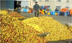 دلایل عرضه میوه کمکیفیت در میادین میوه و ترهبار