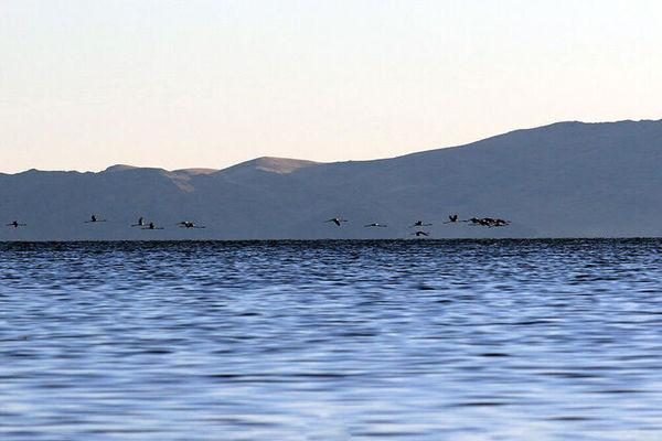 افزایش ۵۸ سانتیمتری تراز دریاچه ارومیه در بهار ۹۹