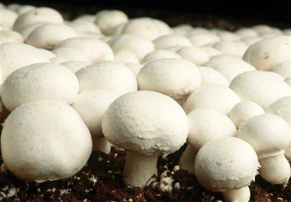 خطر خوردن قارچ های سمی را جدی بگیرید