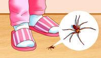 روش های مبارزه با حشرات خانگی