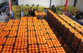 جزئیات تدابیر اتخاذ شده برای تنظیم بازار میوه در شب عید