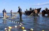 امروز آخرین روز صید ماهیان دریای مازندران
