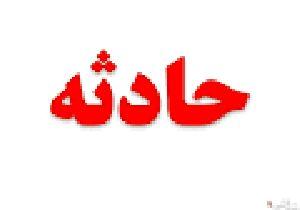 حملات خونین گرگهای هیبریدی به ۱۳ زنجانی + جزییات