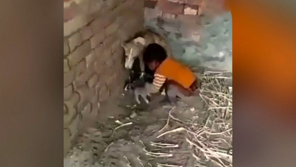 درگیری یک سگ با کودک + فیلم