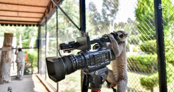 جانور شیطان باغ وحش ترکیه + عکس