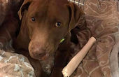 وفاداری عجیب یک سگ سوژه رسانه ها شد!+ فیلم