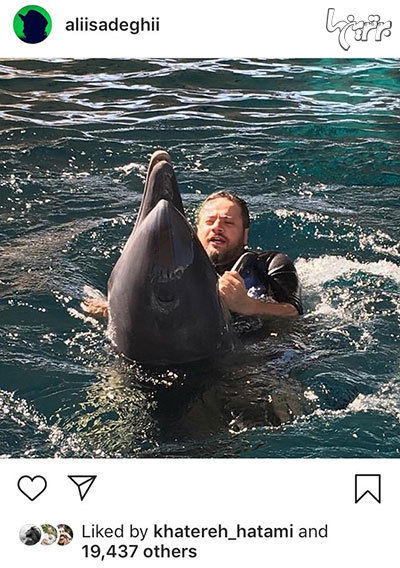 دلفین بازی علی صادقی در استخر + عکس