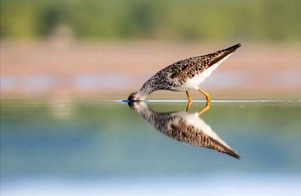 انعکاس یک پرنده در عکس