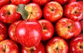 افزایش ۱۰ درصدی قیمت میوه/ هندوانه ارزان شد