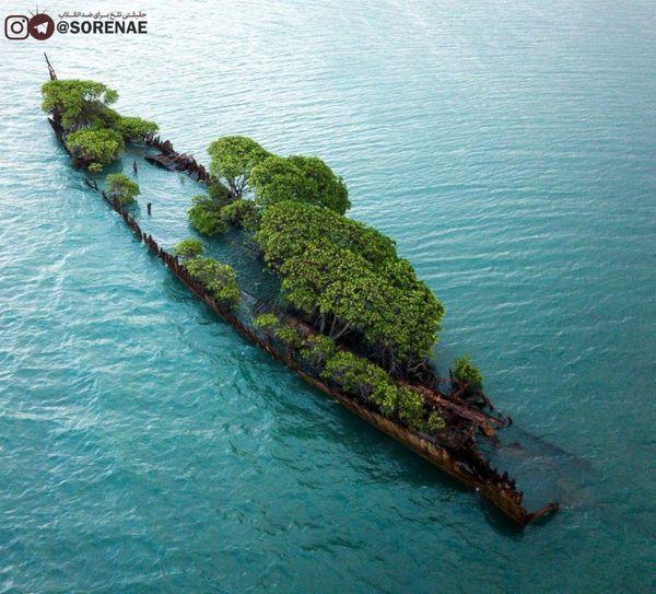 کشتی غرق شده در استرالیا به باغچه تبدیل شد