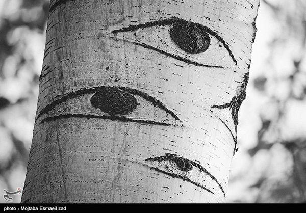 درختانی که چشم دارند
