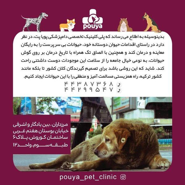 راه حل مریم امیرجلالی برای حمایت از حیوانات ولگرد