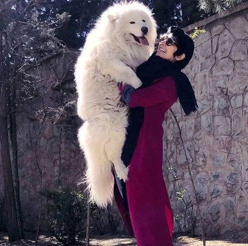 مریم معصومی و سگ غول پیکرش+عکس